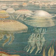 Antique Jellyfish Print Original German by CarambasVintage on Etsy, $24.00