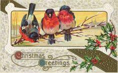 Christmas Birds - vintage Christmas card
