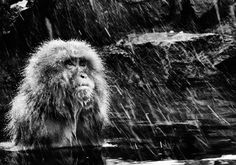 "Fargo by David Yarrow 315gsm Hahnemühle photo rag Baryta paper Standard 37 x 53"" Unframed / 52 x 68"" Framed Editions of 12 Large 56 x 80"" Unframed / 71 x 95"" Framed Editions of 12 For questions or prices please contact us at info@igifa.com IGI FINE ART"
