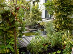 Secret Paris: A Tiny Roof Garden with an Eiffel Tower View: Gardenista