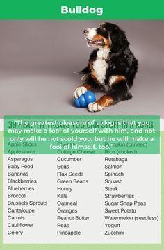 Bulldogs Pup Bulldo Dogs Dog Food Recipes Puppy Treats
