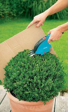 Cum se tund arbustii decorativi dandu-le forme deosebite – Idei practice