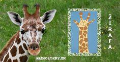 Žirafa Goats, Education, Children, Ms, Animals, Young Children, Boys, Animales, Animaux