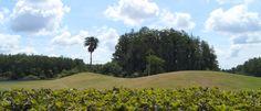 Rolling Hills - Central Park in East Orlando, FL