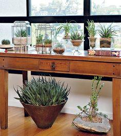 Resistente, a suculenta é uma das melhores espécies para quem não tem tempo ou vocação de jardineiro. A família vive com pouca luminosidade e rega. No aparador, o paisagista Odilon Claro usou porta-mantimentos, compoteiras e terrários como vasos