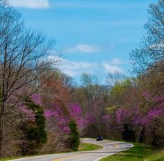 Bright redbuds during springtime on the Natchez Trace Parkway. Natchez Trace, Spring Flowers, Spring Time, Scenery, Bloom, Country Roads, Bright, Plants, Photos