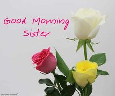 Good Morning is the ideal time to write sweet messages for your sweetheart. Take a look at these romantic good morning sweetheart messages pictures. Good Morning Darling Images, Good Morning Sister Images, Good Night Sister, Good Morning Honey, Good Morning Angel, Latest Good Morning Images, Good Morning Images Download, Good Morning Texts, Good Morning Picture