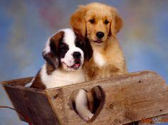Verschiedene Hunderassen
