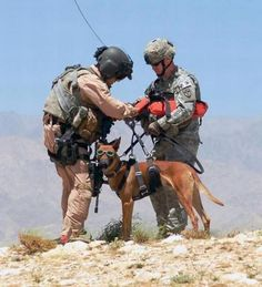 Dogs in Army