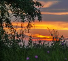 Willow at sunset by Andrada Nistor Landscape Photos, Celestial, Explore, Sunset, Outdoor, Scenery, Outdoors, Sunsets, Outdoor Games