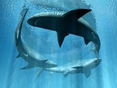 How To Avoid A Shark Attack? http://anniejenningspr.com/jenningswire/lifestyle/podcast-how-to-avoid-a-shark-attack/