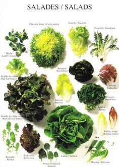 Les salades   en français