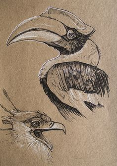 Great Indian Hornbill and Secretary Bird - pen and white colored pencil on toned paper