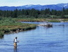 The Yellowstone River is considered to be one of the great trout streams of the world.