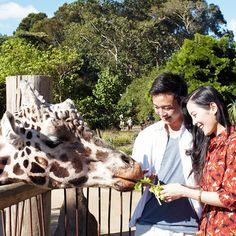 Encuentros y atracciones | Cosas divertidas que hacer en Auckland