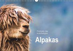 Portraits der kuscheligen Alpakas - CALVENDO Kalender von Bianca Mentil
