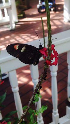 #butterflies everywhere