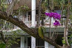 Orchids grow abundant in Key West because of the climate. Many of the trees in Key West  have orchids purposely attached to trees.  You can see the root system  has embedded itself firmly to the tree.