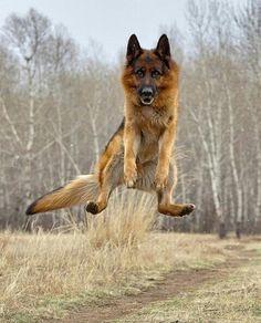 ¡Un gran salto!...