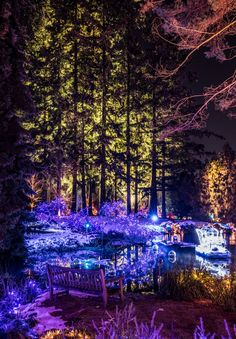 its begging to look like christmas at vandusen gardens in Vancouver. I love the backlit trees, the displays and the colours for the season here. Vancouver, Cities, That Look, Trees, Gardens, Colours, Display, Seasons, Architecture