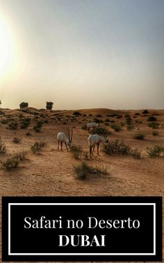 Nossa experiência no Safari no Deserto em Dubai nos Emirados Árabes Unidos