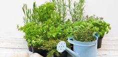 Hortas em pequenos espaços precisam de sol e cuidados simples
