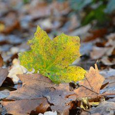 autumn herfst blog