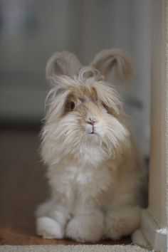Cutest bunny ever. It looks like a stuffed animal. I want one.