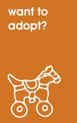 Raleigh adoption resource