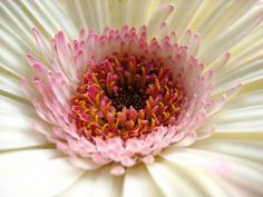 white & pink flower Nature Plants, Pink Flowers, Planting Flowers