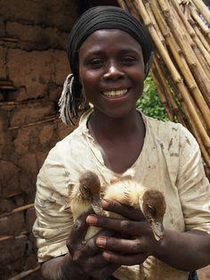 Ducks support livelihoods in eastern Democratic Republic o…   Flickr