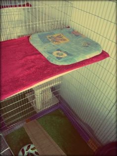 Cat Hotel in Budapest, soft place for long rest :)