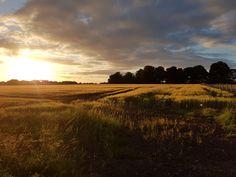 Irish Farmland Sunset [OC] [4032x3024] the_peckham_pouncer http://ift.tt/2tgfc07 July 02 2017 at 06:33PMon reddit.com/r/ EarthPorn