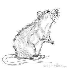 8 Ideas De Tatuaje De Rata Tatuaje De Rata Ratas Dibujo Ratas