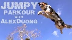 alex & jumpy the parkour dog - YouTube