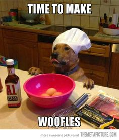 funny-cooking-dog-hat-eggs