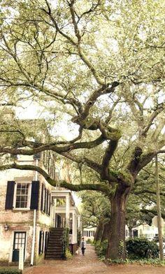 The corner of Jones & Barnard in Savannah. Drop dead gorgeous part of Jones.