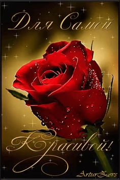 Beautiful Love Pictures, Beautiful Flowers, Animated Heart, Best Urdu Poetry Images, Rose Images, Happy B Day, Happy Birthday Wishes, True Friends, My Flower