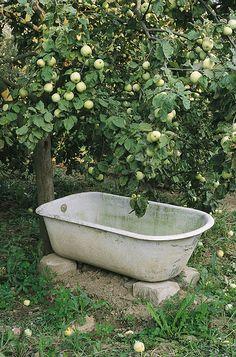 1000 images about ducks on pinterest garden bathtub for Garden tub vs standard tub