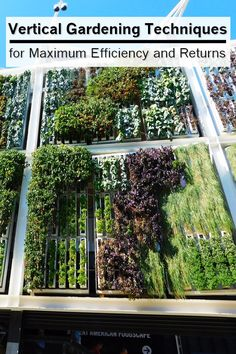 Vertical Gardening Techniques for Maximum Efficiency and Returns - Whether your garden is large or small, you can make better use of every square inch by using vertical gardening techniques to grow upright crops. Pole beans typically produce twice as many beans as bush varieties, and the right trellis can double cucumber yields.