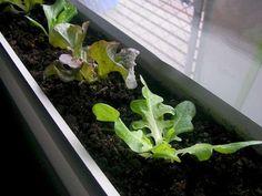 grow vegetables indoor over winter