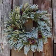 olive and rosemary wreath | Silvertree Wreath has shimmery leucadendron argenteum leaves, rosemary ...