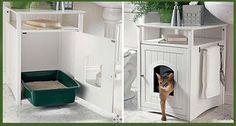 El uso de la caja de arena para gatos | Medico Veterinario
