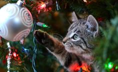 5 Ways to Keep Your Pets Safe This Christmas