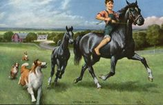 SETTING THE PACE, 1950's ILLUSTRATED PRINT OF BLACK HORSE, COLT, AND COLLIES galloping on a farm, by Walter Haskell Hinton,