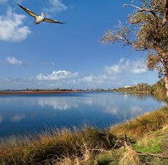 Pelican Country: Mandurah WA  Been there, Donne that, Loved it !!!