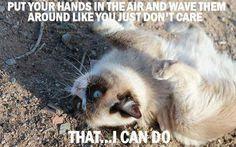 Grumpy Cat Memes added a new photo. Grumpy Cat Meme, Grumpy Cat Quotes, Cat Memes, Grumpy Kitty, Kitty Kitty, Memes Humor, Hello Kitty, I Love Cats, Cute Cats