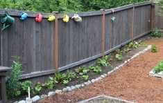 Mavis Garden Blog – Replanting Zucchini Plants … Again!