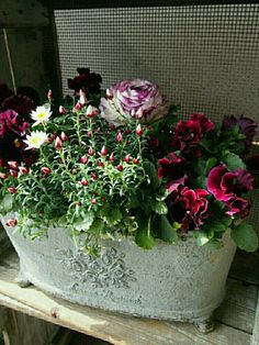 Container Flowers, Green Flowers, Container Gardening, Bouquet, Beautiful, Gardens, Window Boxes, Vases, Plants