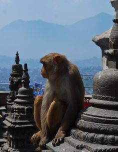 Nepal - Monkey 3 by LLukeBE.deviantart.com on @deviantART